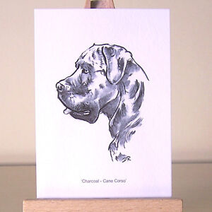 The-smallest-Italian-Mastiff-as-a-Cane-Corso-drawing-ACEO-art-card