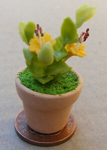 1.12 Jaune & Greenplant + Pot Maison De Poupées Miniatures Jardin Accessoire G23-afficher Le Titre D'origine