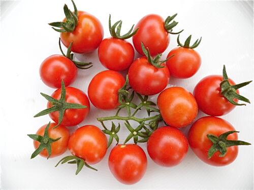10 Tomatensamen rote Rispen-Kirsch-Tomate zuckersüß Rispen aromatisch knackig