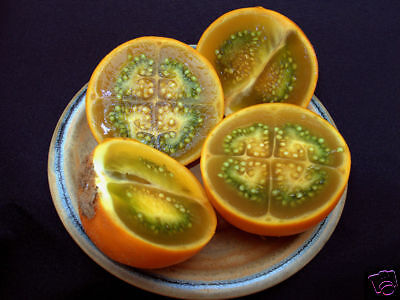 G357 Naranjilla Seeds Semi Samen 8 Seeds Tomato Quito Solanum Quitoense