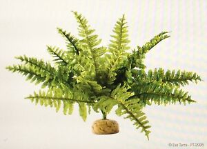 Exo Terra Realistic Medium Boston Fern Rainforest Terrarium Ebay