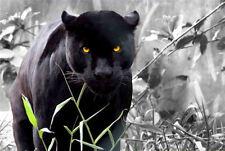 Framed Print - Jet Black Jaguar Ready to Attack (Animal Picture Poster Panther)