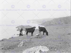 LANDSCAPE-ACHILL-ISLAND-IRELAND-COW-CATTLE-MAYO-ART-PRINT-POSTER-BB10355