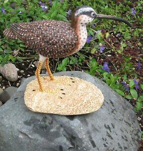Long-Billed-Dowitcher-Shore-Bird