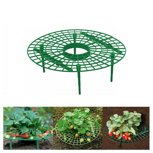 Strawberry Growing Support Practical Strawberry Rack Plant Climbing Vine Stand