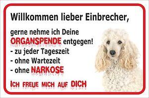 Einbrecher 15x20-40x60cm Hund Gut FüR Energie Und Die Milz Schild Vorsicht Weißer Pudel