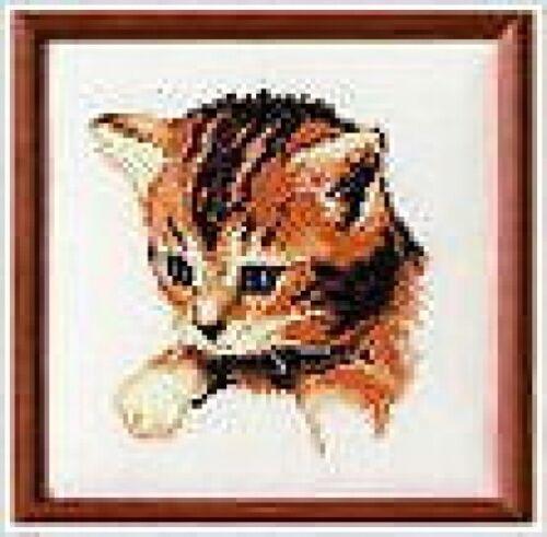 "14 Count Blue Eyed Kitten Cross Stitch Kit 6.4/"" x 6.4/"" Cute Vervaco"