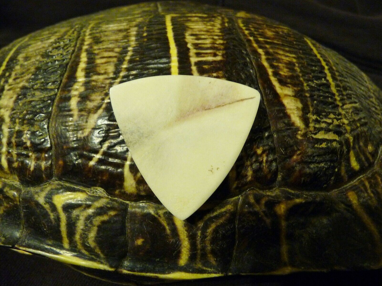 SLY rot'S  TURTLE SHELL BlauGRASS TRI-CORNER ACOUSTIC GUITAR PICK 100% LEGAL