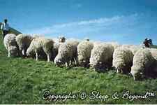 Certified organic 100% Merino wool mattress topper, Sleep & Beyond, ivory, Queen