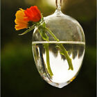 Clear Egg Shape Glass Hanging Vase Bottle Terrarium Plant DIY Home Garden Decor