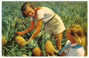 Image Is Loading HAWAII Ladies Harvest Pineapples From Field VINTAGE 1950