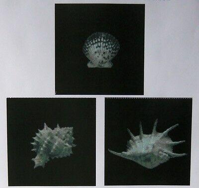 Sea Shells - Set of 3 Counted Cross Stitch Chart No.13-100/1/2