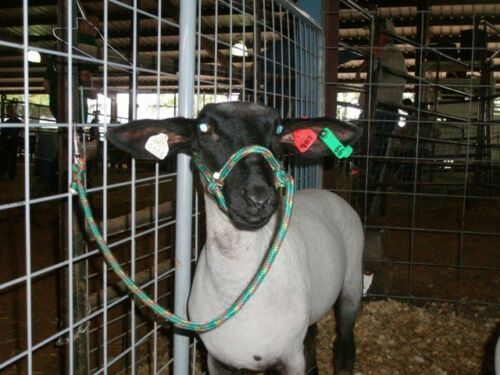 Sheep Goat Llama halter with clip **SPECIAL**