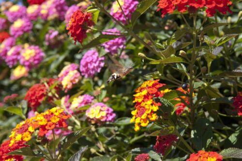 viele Farben mit einer Blume die wunderschöne Wandel-Rose !