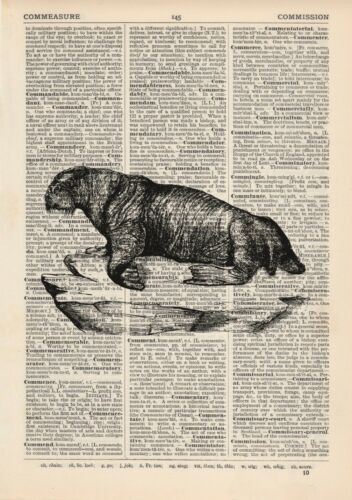 Walrus Dictionary Art Print Fishing Sea life Vintage Nautical