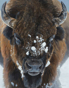 BISON ART PRINT - Winter Warrior by Terry Isaac Wildlife Buffalo Poster 19x13