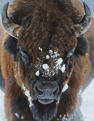 BISON ART PRINT Winter Warrior by Terry Isaac Wildlife Buffalo Poster 18.5x23