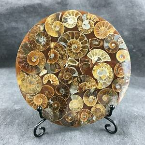Top-Natural-ammonite-fossil-conch-Crystal-specimen-healing-stand-1PC