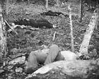 New 8x10 Civil War Photo: Little Round Top Dead after Battle of Gettysburg