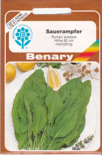 Sauerampfer Rumex acetosa mehrjährig 200 Pflanzen Benary Samen
