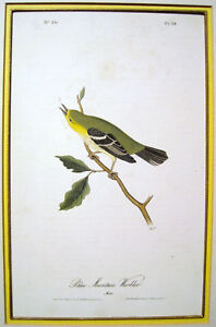 John-James-Audubon-034-Blue-Mountain-Warbler-034-1844