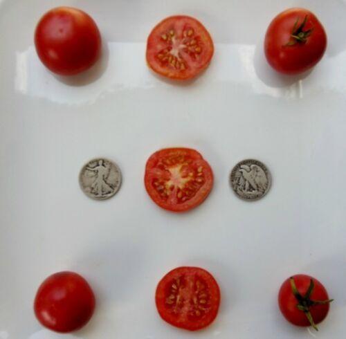 40 Seeds Organic Heirloom Tomato Seeds Oregon Spring Very Early
