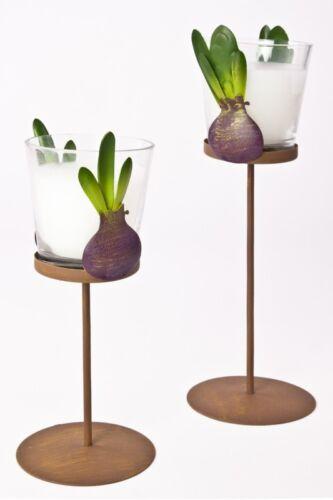 Wachsfüllung Set Kerzenhalter Hyazinthen bemaltes Eisen 2tlg Glas