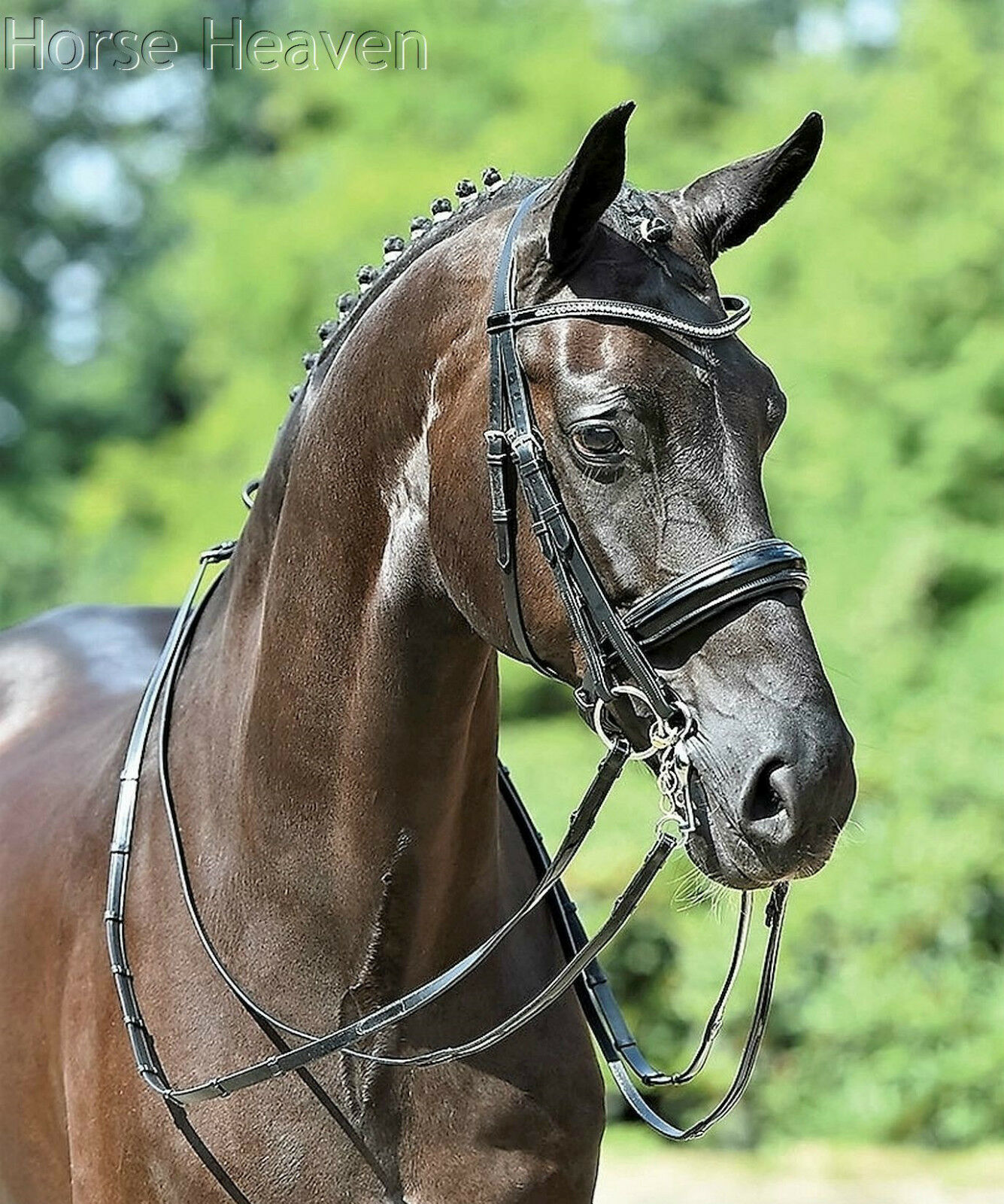 Busse Pesaro Patent Italian Leather Curb Reins Match the Massa Double Bridle
