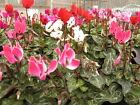 floralsundriesandplants