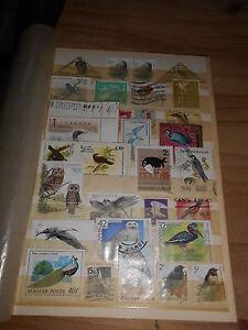 Album-Seite-voll-mit-alten-Briefmarken-Motiv-Vogel-Voegel