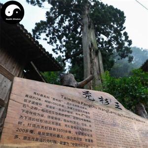 online dating site Taiwanissa dating American Vietnam tyttö
