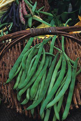 Vegetable - Dwarf French Bean - Canadian Wonder - 60 Seeds