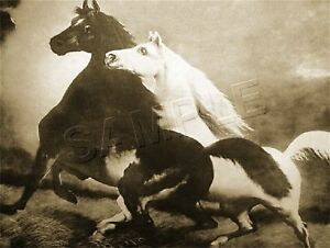 "SPIRITED HORSES #1 Storm THE ALARM CANVAS Art Print ~ SEPIA - Size 11"" x 8 1/2"""