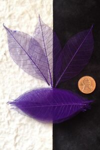 25-Skeleton-Leaves-Purple-vibrant-see-through-leaf-Wedding-party-Anniversary-Med