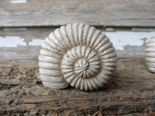 CONCH SHELL Drawer Pull Knob ~ Dresser Nautical Coastal Beach Creamy Sand
