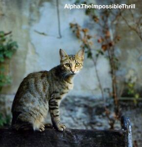 ALPHA-the-impossible-thrill-CD-album-downtempo-trip-hop-neo-soul