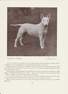 ENGLISH BULL TERRIER OLD VINTAGE 1934 NAMED DOG PRINT PAGE