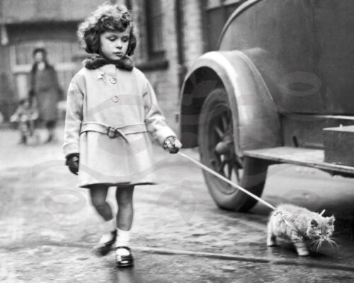 Vintage Photo//Print//1940/'s//16x20 //Black and White//Child//Girl walking her cat