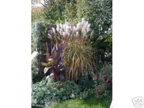 schöne Pflanzen Spiel im Wind 4 Gräser