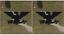 Ejercito-Coronel-0-6-Diseno-Chevron-Multicam-Ocp-Rango-Hombreras-5-1cm-x-Gancho miniatura 1
