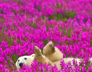 100-Pieces-graines-Epilobe-Epilobium-augustifolium-Bonsai-fleurs-plantes-RARE-2019-N