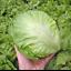 Seeds-Iceberg-Lettuce-Salad-Green-Vegetable-Organic-Heirloom-Russian-Ukraine thumbnail 4