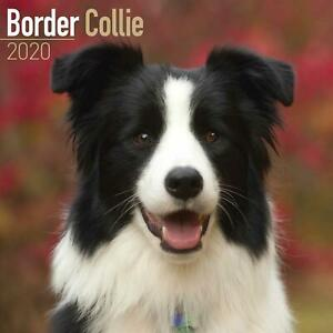 Border-Collie-2020-Official-Square-Wall-Calendar