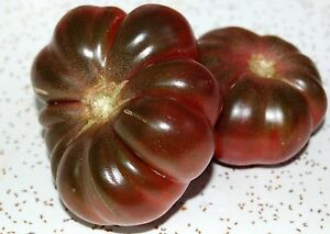 ORGANIC-TOMATO-PURPLE-CALABASH-50-FINEST-SEEDS