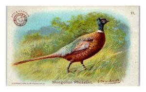Mongolian Pheasant, Arm & Hammer Game Bird Series Victorian Trade Card *VT30A
