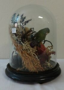 Vintage-Victorian-Style-Green-Parakeet-Taxidermy-Display-Under-Glass-Dome