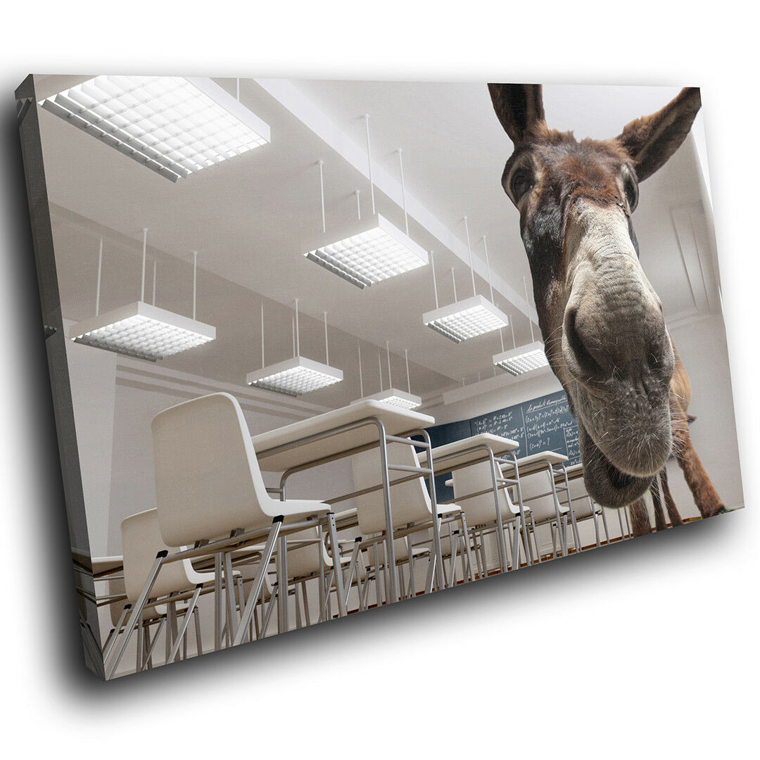 A166 Donkey Funny Weiß braun Funky Animal Canvas Wall Art Large Picture Prints