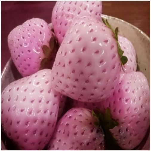 20 lipstick pink flowering strawberry plant seeds ebay musk pink strawberry seeds x 20 mightylinksfo