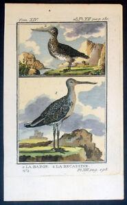 1770 Comte de Buffons Antik Ornithologie Print-Becassine oder Schnepfe Vögel