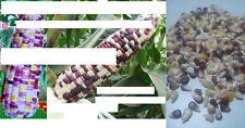 40x Regenbogen Mais Bunt Samen Saatgut Pflanze Selten Getreide Sorte Neuheit #59
